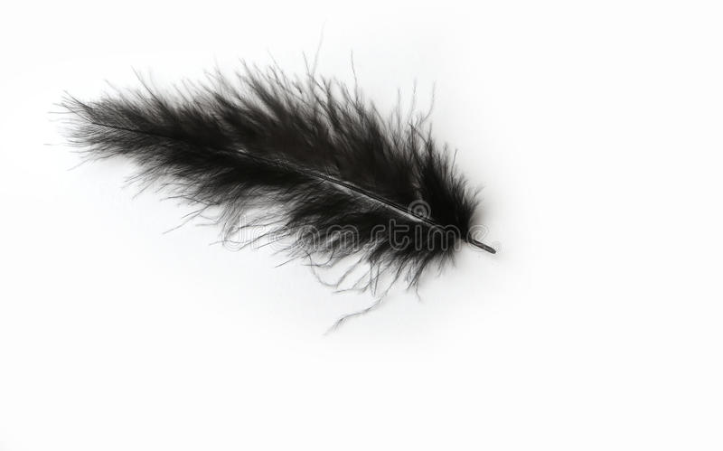 Schwarze Marabufeder auf einem weißen Hintergrund stockbilder
