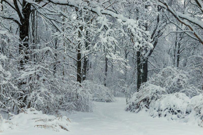 Schwarze Niederlassungen und Schwarzweiss-Winterwald des weißen Schnees lizenzfreie stockbilder