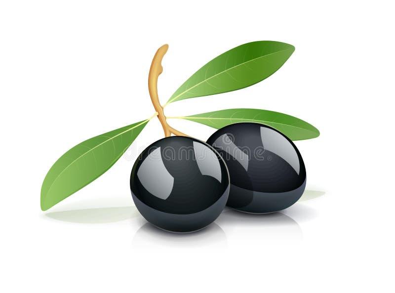 Schwarze Olive zwei mit Blatt vektor abbildung