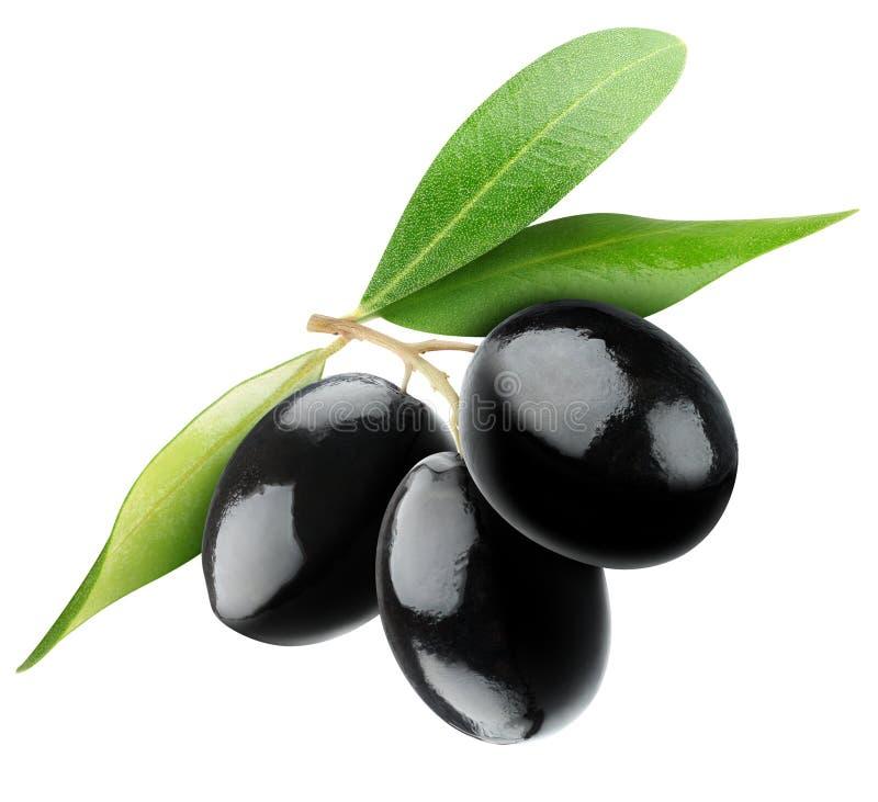 Schwarze Oliven stockfotografie