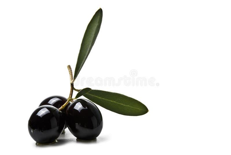 Schwarze Oliven und Olivenöl   lizenzfreies stockbild