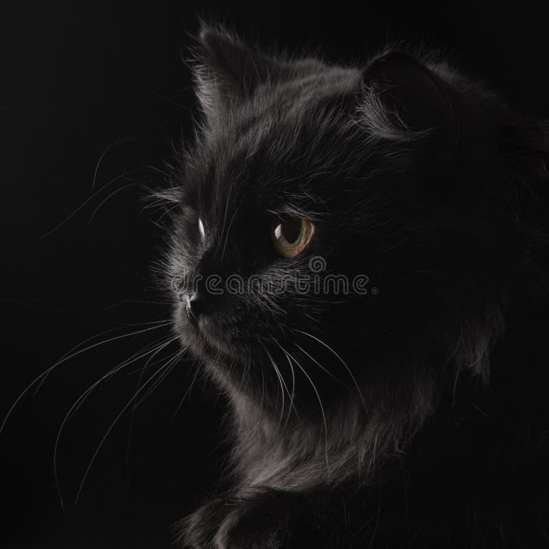 Schwarze persische Katze lizenzfreie stockfotografie