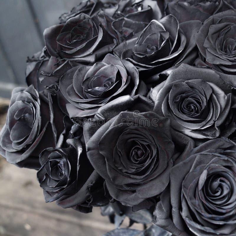 Schwarze Rosen stockbild