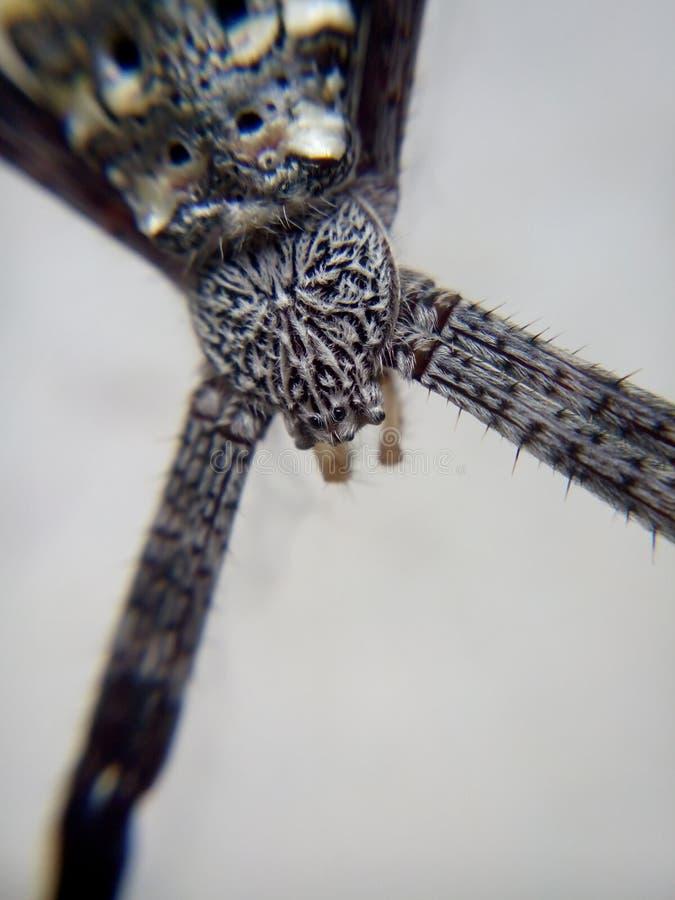 Schwarze Spinne lizenzfreie stockfotografie
