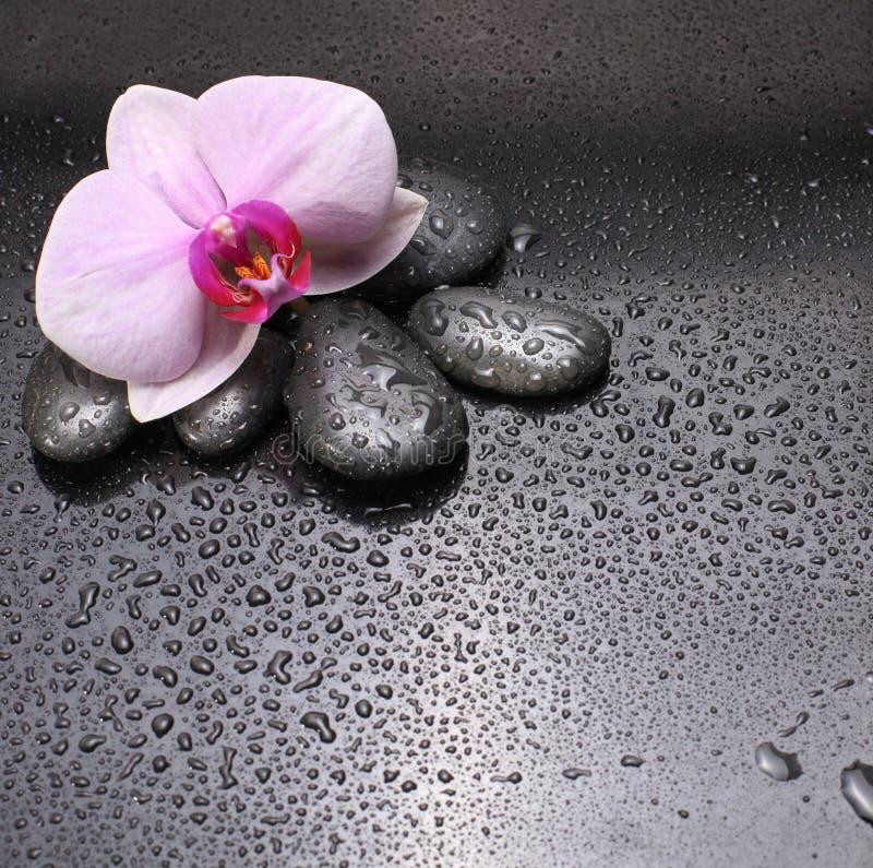 Schwarze Steine und Orchidee stockfotografie