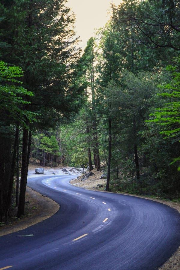 Schwarze Straße im Wald in Yosemite Nationalpark stockfoto