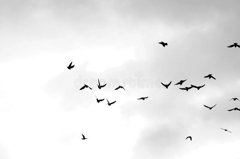Schwarze Vögel lizenzfreies stockbild