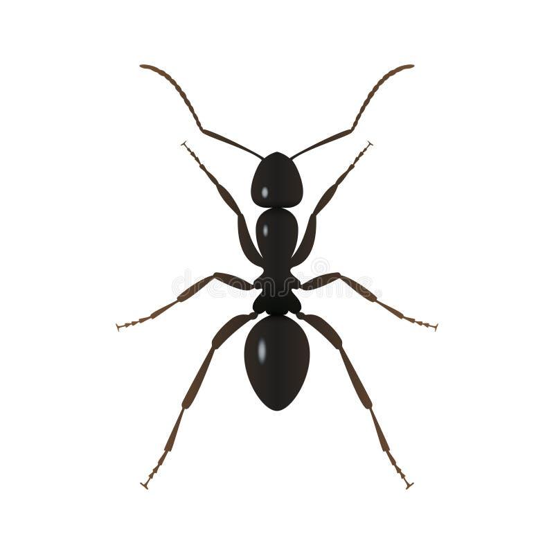 Schwarzer Ameisenzeichenabschluß oben vektor abbildung