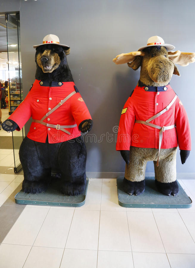 Schwarzer Bär und Elche kleideten in der Uniform der königlichen kanadischer berittener Polizei in Jasper National Park an stockbilder