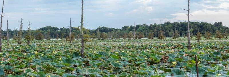 Schwarzer Bayou See ist ein Fischer ` s Schutz lizenzfreie stockfotografie