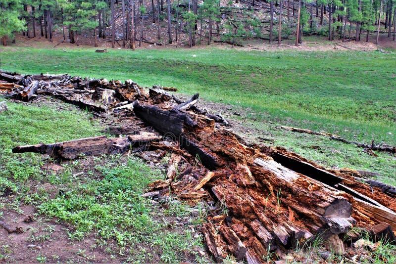 Schwarzer Canyon See, Navajo County, Arizona, Vereinigte Staaten, staatlicher Wald Apache Sitegreaves lizenzfreie stockbilder