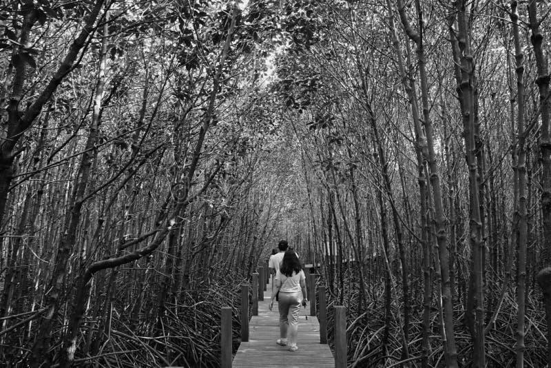 Schwarzer Dschungel stockfoto