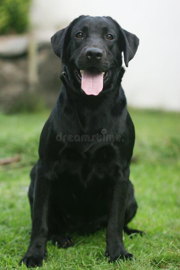 Schwarzer Hund stockfotografie