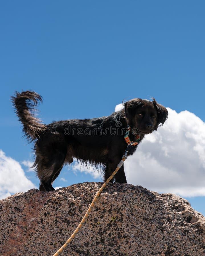 Schwarzer Hund auf Berg stockfotografie