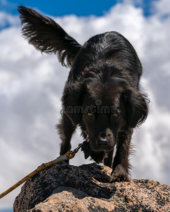 Schwarzer Hund auf Berg lizenzfreie stockfotografie