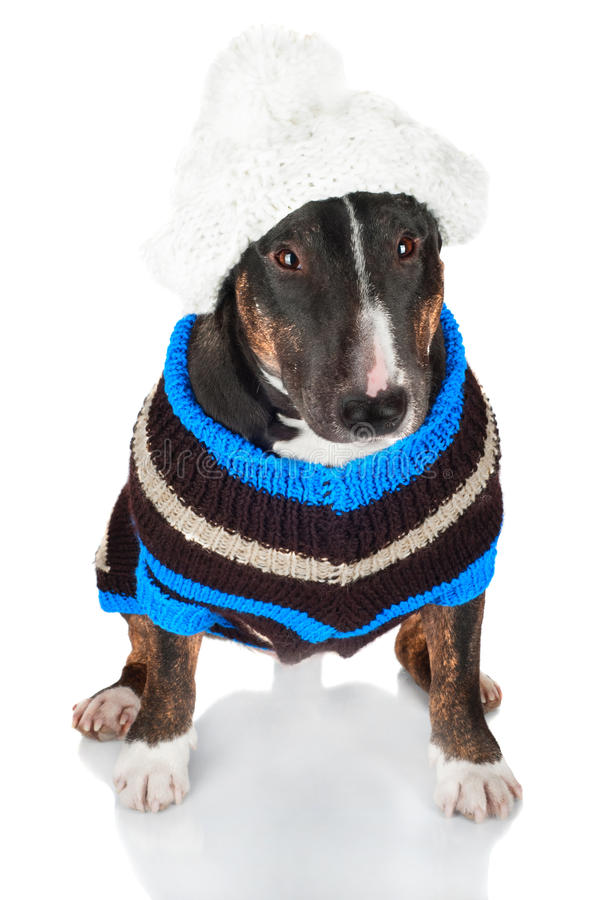 Schwarzer Hund in einer Strickjacke und in einem Hut lizenzfreie stockfotos