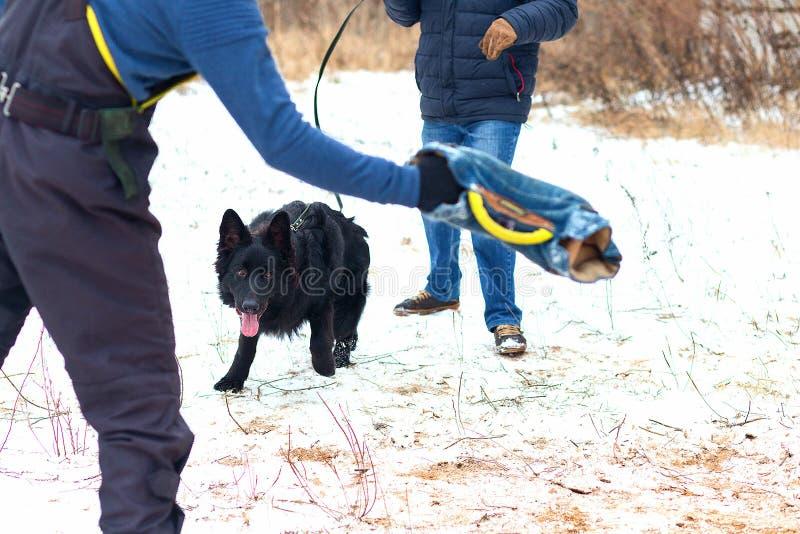 Schwarzer Hund führt ergeben Wintertraining durch lizenzfreies stockbild