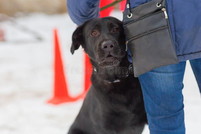 Schwarzer Hund führt ergeben Wintertraining durch stockfotografie