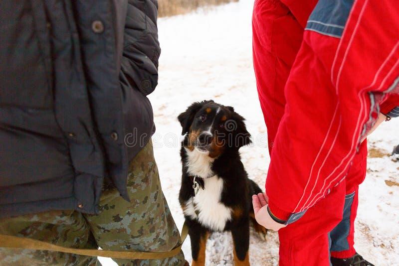 Schwarzer Hund führt ergeben Wintertraining durch stockbilder