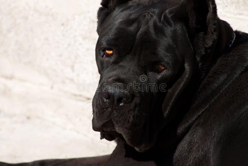 Schwarzer Hund mit ausdrucksvollem Blick stockfoto