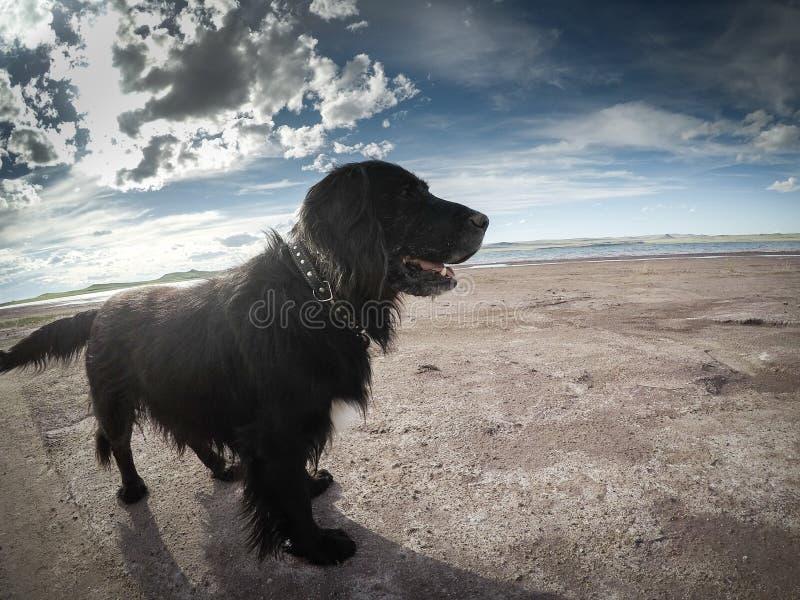 Schwarzer Hund - weiße Träume stockfoto