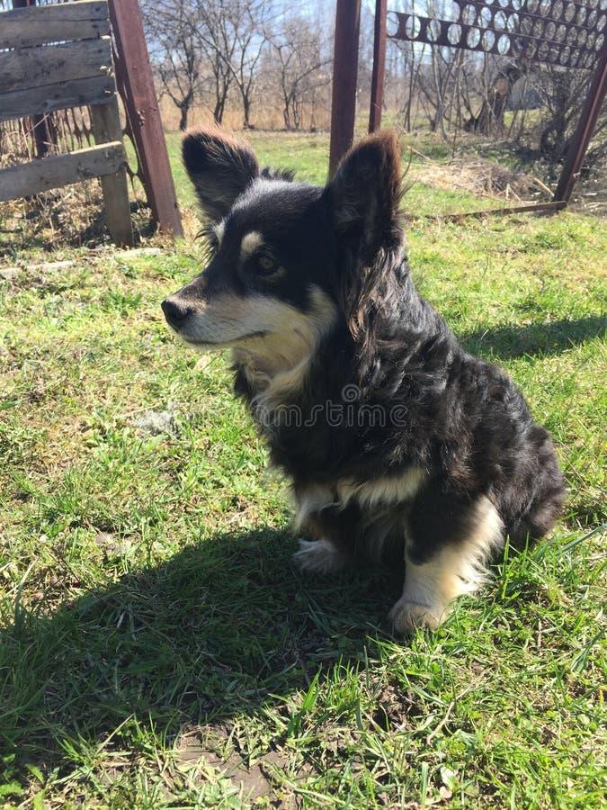 Schwarzer Hundeäußeres Lächeln stockfoto