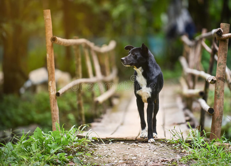 Schwarzer Hundegehen lizenzfreies stockfoto