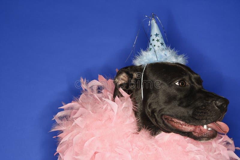 Schwarzer Hundetragender Partyhut lizenzfreies stockfoto