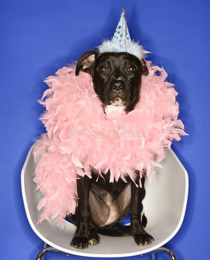 Schwarzer Hundetragender Partyhut und Federboa. lizenzfreie stockfotos