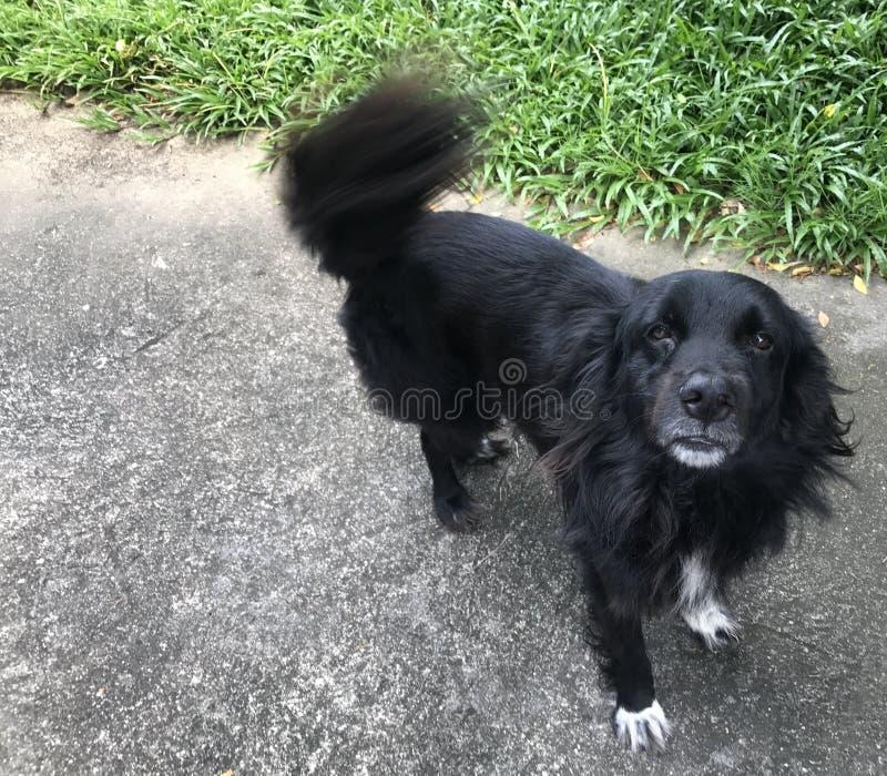 Schwarzer kleiner Hund lizenzfreies stockfoto
