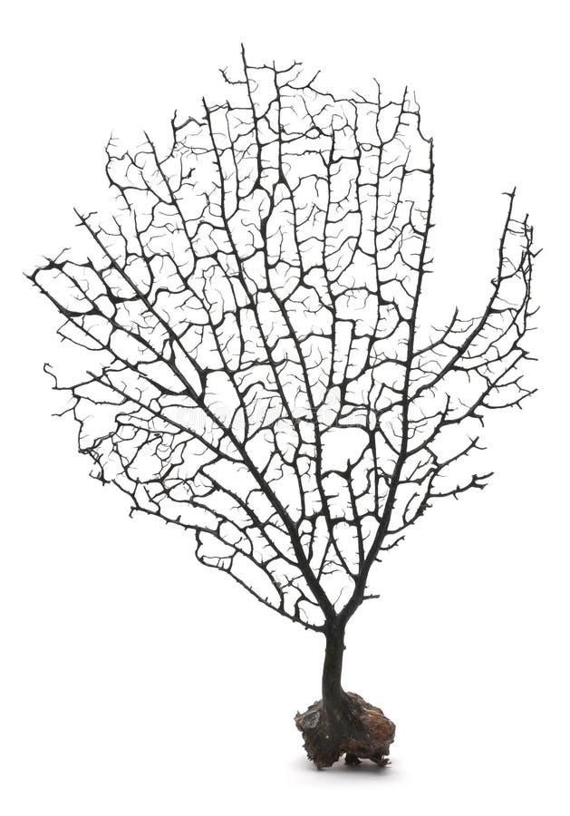 Schwarzer korallenroter Zweig stockbilder