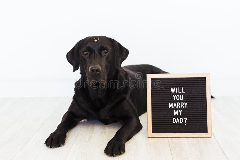 Schwarzer Labrador-Hund, der auf dem Boden mit einem säubernden Ring auf seinem Nasen- und Weinlesebuchstabebrett mit Mitteilung  stockfoto