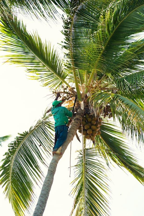 Schwarzer Mann auf einer Palme hackt sich verzweigt weg stockbilder