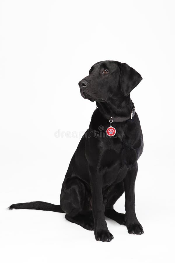 Schwarzer netter Hund 1 lizenzfreie stockfotografie