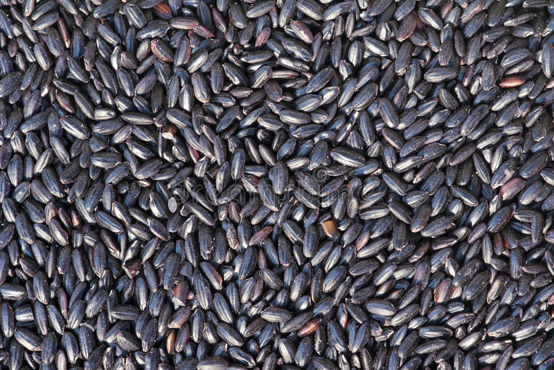 Schwarzer Reis stockfoto