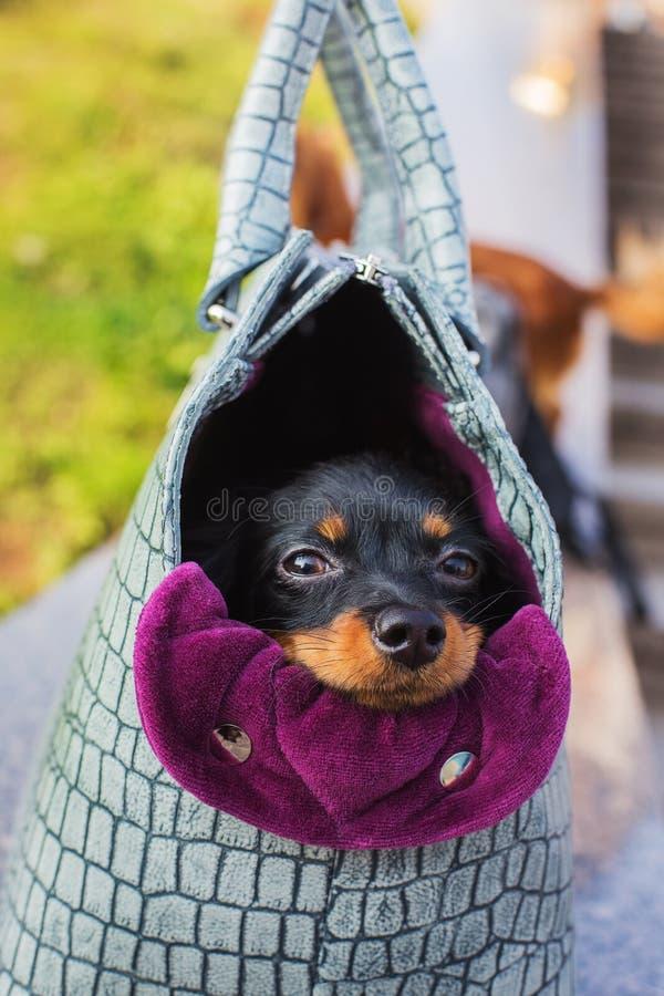 Schwarzer Russe Terrier in der Hundetragetasche stockbild