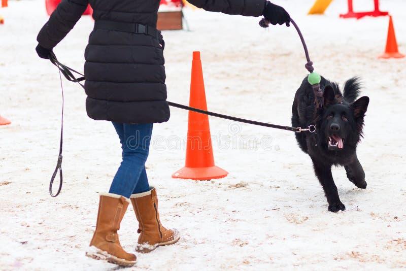 Schwarzer Schäferhund, der ergeben im Winter auf Training sitzt lizenzfreie stockbilder