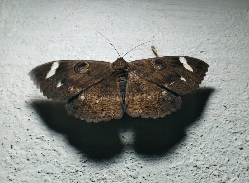 Schwarzer Schmetterling mit wei?en Stellen lizenzfreie stockfotografie