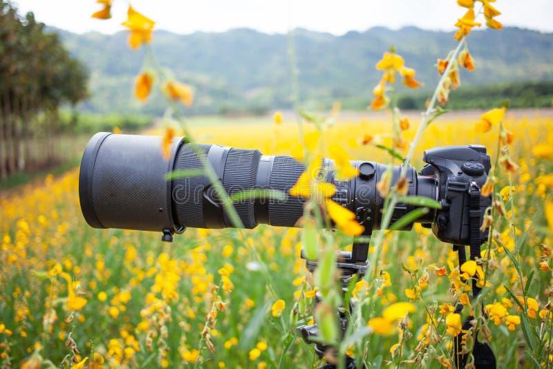 Schwarzer Superteleobjektiv- und Digitalkamerakörper auf Stativ auf dem gelben Blumengebiet stockfotos