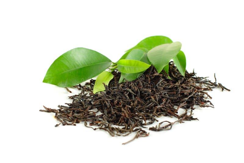 Schwarzer Tee mit grünem Blatt lizenzfreies stockbild