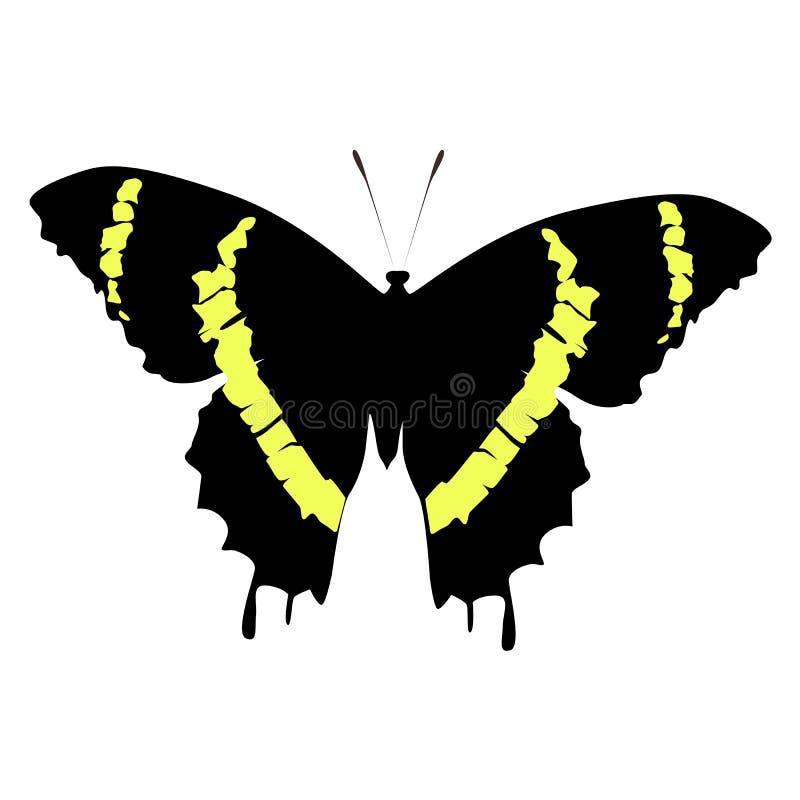 Schwarzer und gelber Schmetterling der schönen farbigen Ikone auf einem weißen BAC lizenzfreie abbildung