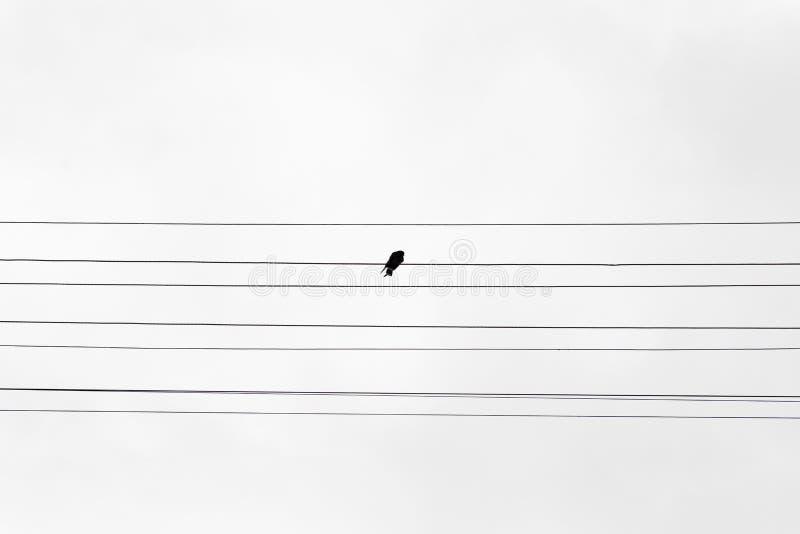 Schwarzer Vogel, der auf Stacheldraht sitzt stockfotografie