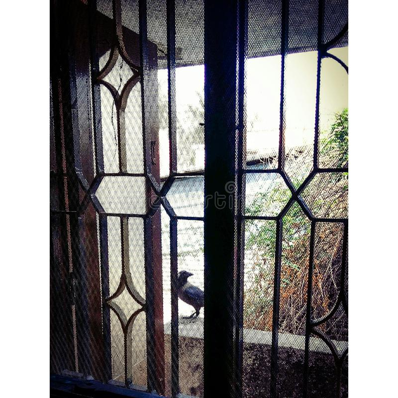 Schwarzer Vogel, der nach etwas sucht stockfotos