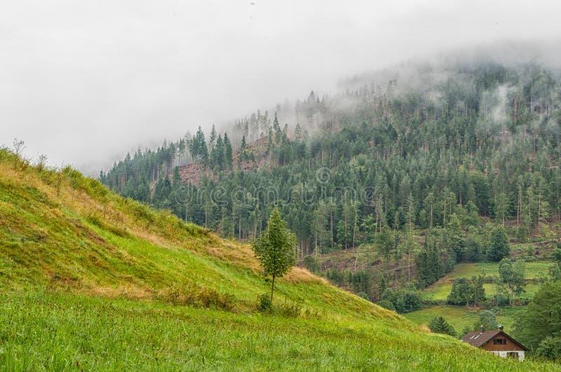 Schwarzer Wald Deutschland Schwarzwald stockfoto