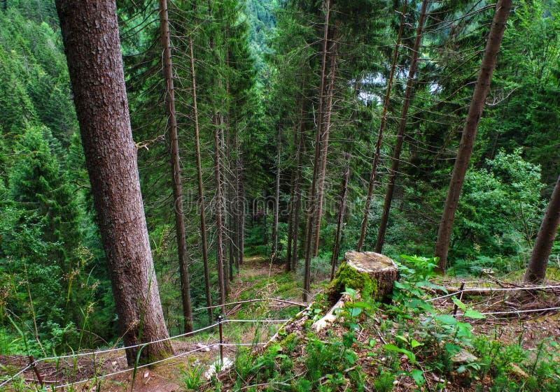 Schwarzer Wald Deutschland Schwarzwald lizenzfreie stockbilder