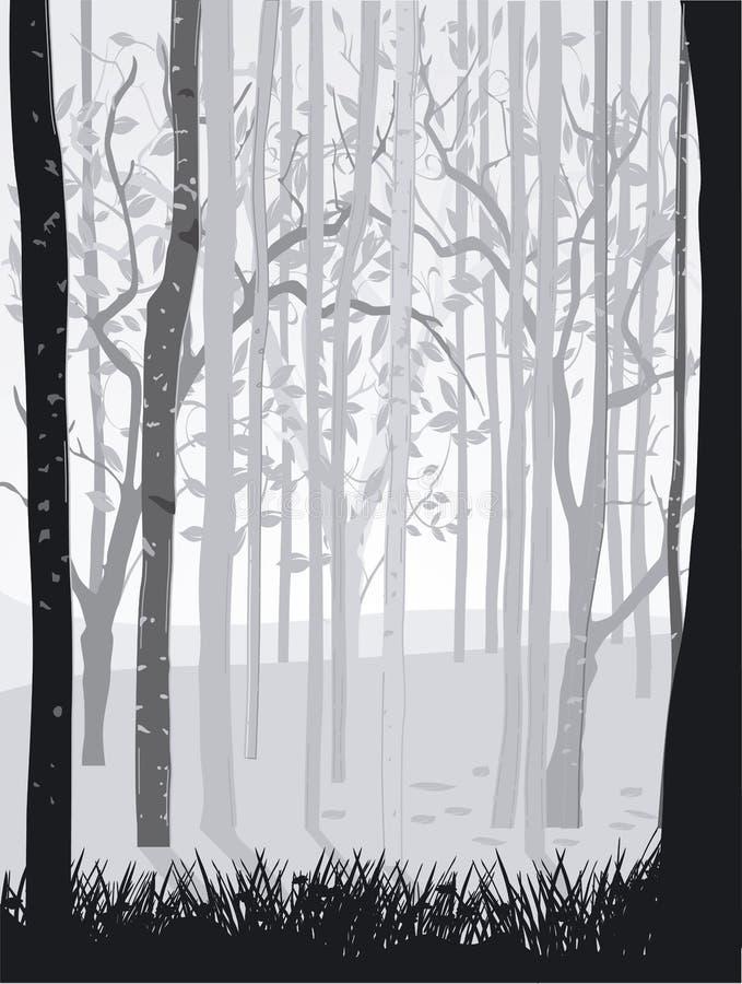 Schwarzer Waldweiß Lizenzfreie Stockfotografie