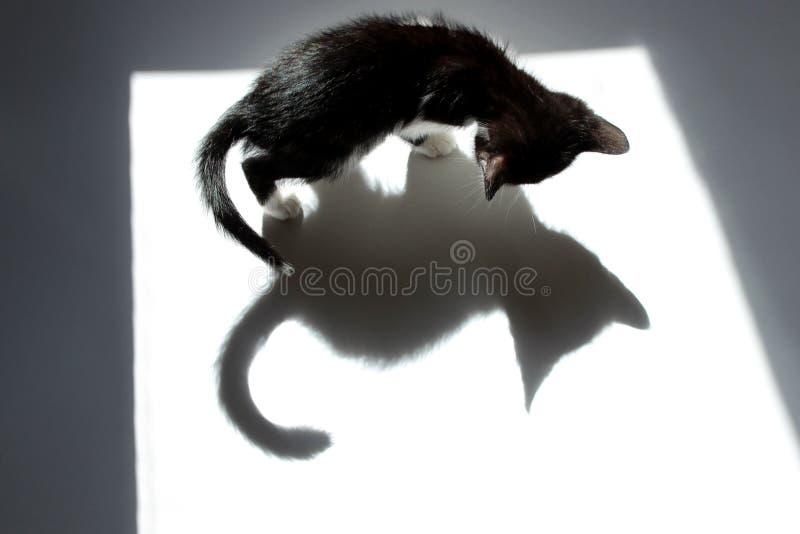 Schwarzer weißer Hintergrund Kitten And His Shadow Overs stockfotografie