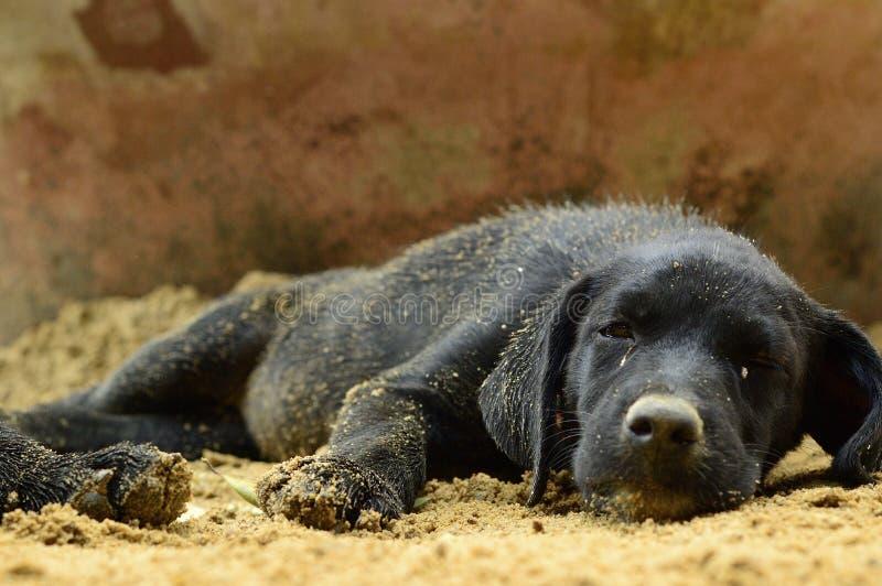 Schwarzer Welpenhundeschlaf Auf Sand Stockbild