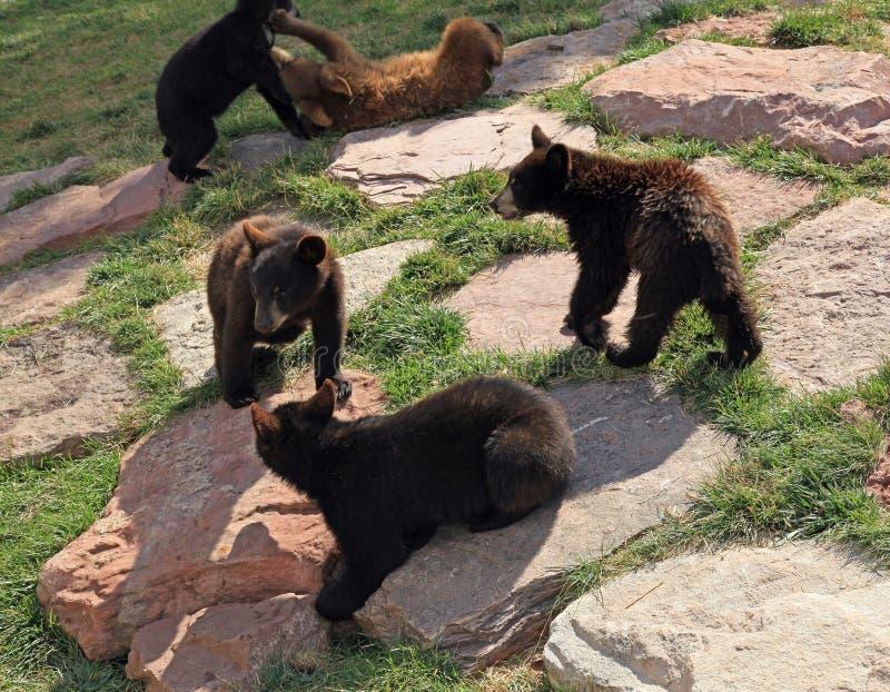 Schwarzes Bärenjunges am Bärn-Land lizenzfreie stockfotos