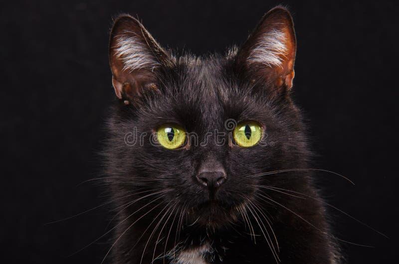 Schwarzes green-eyed Kätzchen auf schwarzem Hintergrund stockbild